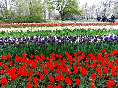 India travelogue enchanting keukenhof and the fables tulips of holland i perhaps owe having become a painter to flowers claude monet mightylinksfo