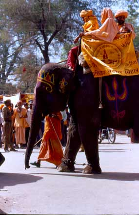 elephants at Kumbha