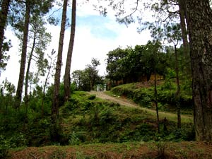 the long winding road to Siddhashram